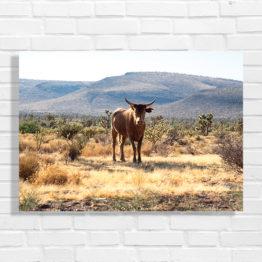 pustynia plakat