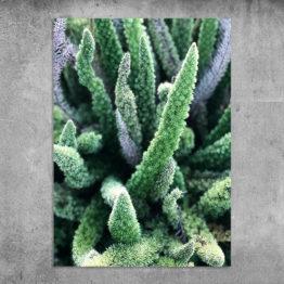 rośliny foto plakat
