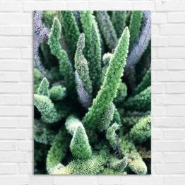natura foto plakat 2299