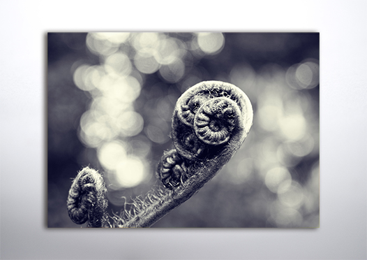 Liść paproci natura plakat 3