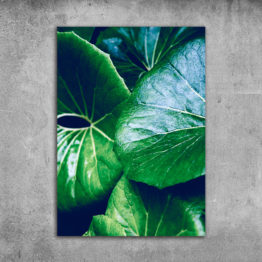 Plakat liście natura dekoracja 3