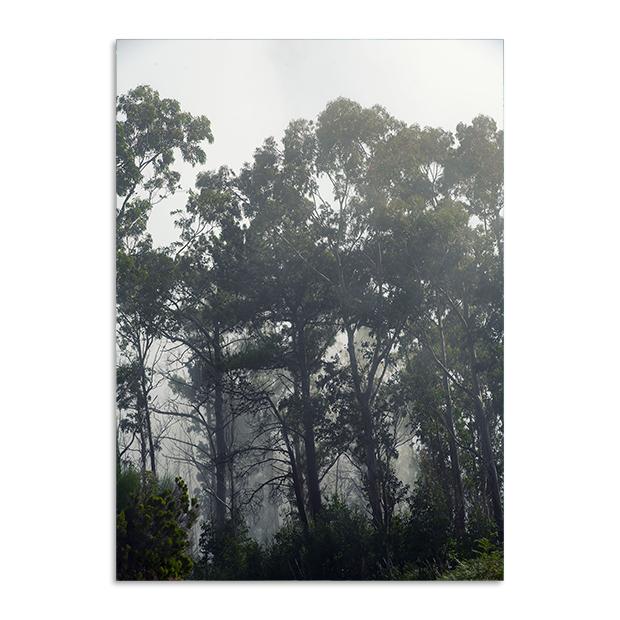 Plakat las mgła natura