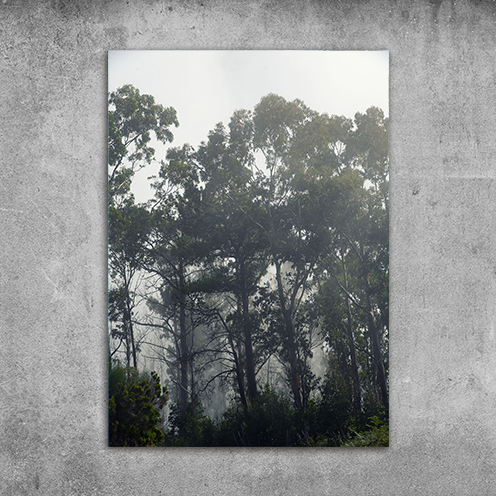 Plakat las mgła natura 3