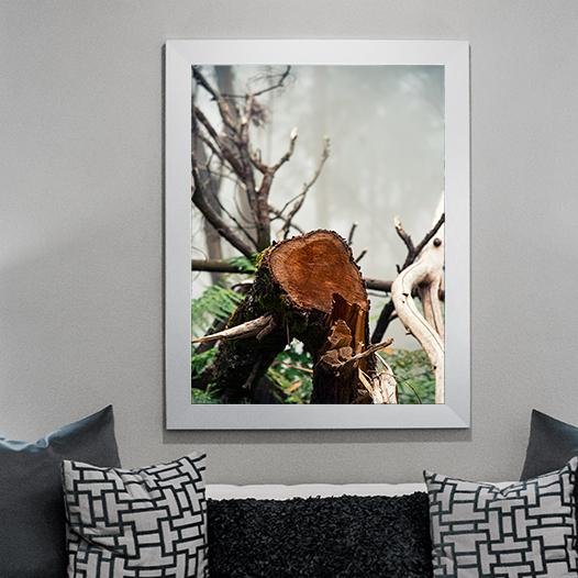 Plakat pień las mgła 2