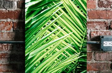liścia palma natyra plakat vintage