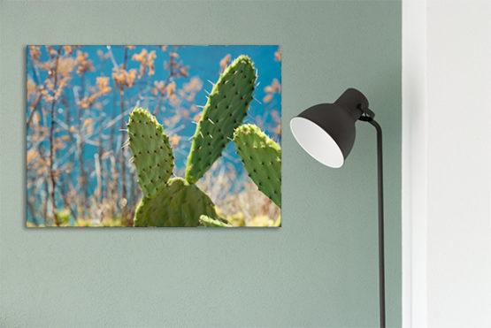plakat natura kaktus