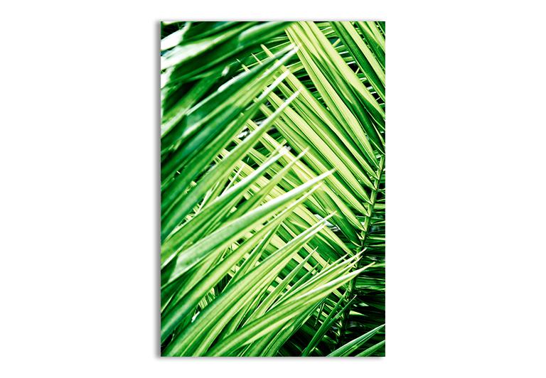 Plakat natura liście palmy