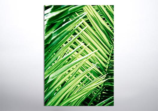 liście palmy natura plakat do pobrania